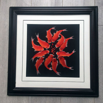 Goldfish Chinese embroidery Painting With framed *UK STOCK*