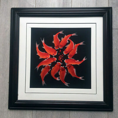 Goldfish Chinese embroidery Painting With framed no glass*UK STOCK*