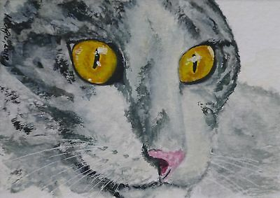 Cat aceo original miniature inktense watercolor ink painting art portrait No12