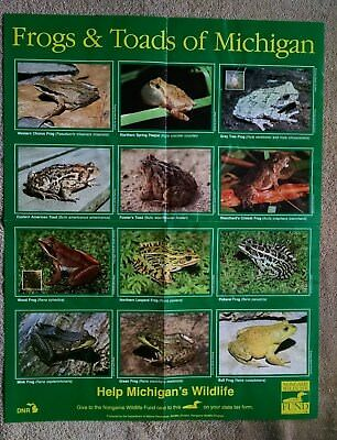 Frogs and Toads of Michigan Poster Dept Natural Resources DNR Wildlife Division