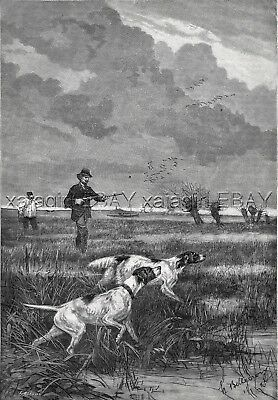 Dog English Setter, Pointer, Hunters, Hunting Woodcock Large 1880s Antique Print