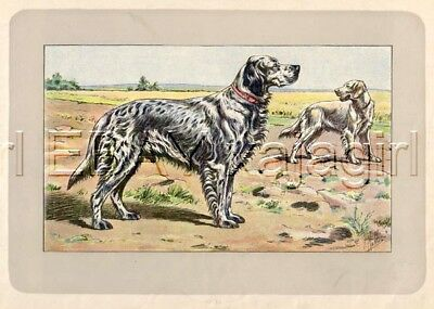 DOG English Setter, Rare Antique 100-Year-Old French Dog Print