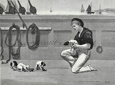 Dog Fox Terrier Puppies (Smooth) on Ship Young Sailor, Large 1880s Antique Print