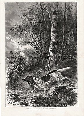 Dog Llewelin Setter (Named & ID's), Rare Large 1870s Antique Engraving Print