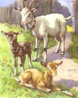 Goat & Her Baby Kid, 70-year-old CHILDREN's Print