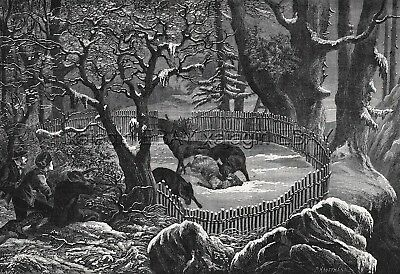 Wolf Hunting Trapped Baited Sheep, Large 1870s Antique Engraving Print & Article