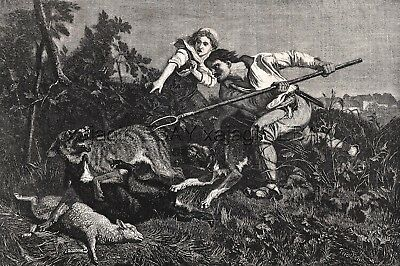 Wolf Kills Sheep, Fought Off by Woodcutter, Large 1860s Antique Engraving Print