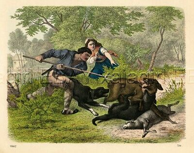 WOLF Versus Farmer & Dogs, Wolves 1860s Antique Hand-Colored Engraving
