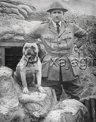 DOG Bullmastiff War Dog & Soldier Bunker, 1920s Print