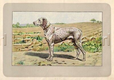 DOG Bourbonnais Pointer Braque, Rare Antique 100-Year-Old French Dog Print