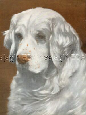 DOG Clumber Spaniel Owned by King George V, Beautiful 1930s Color Linen Print