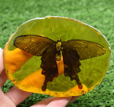 Rare Amber Inner Inlay Butterfly True Insect Specimens Decorative Pieces 114G