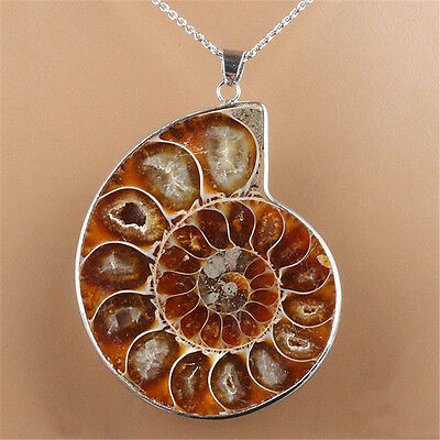 Sea Nautilus Ammonite Fossil Shell Necklace Natural Gemstone Madagascar Pendant