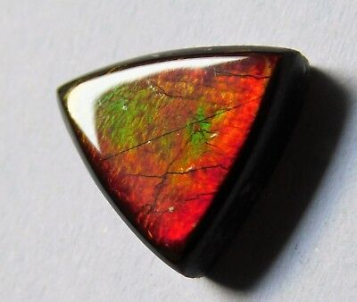 AAA Quality Natural Canadian Ammolite Cabochon Loose Gemstone Y