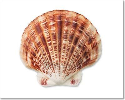 D Black And White Nautilus Shell With Art Print Home Decor Wall Art Poster