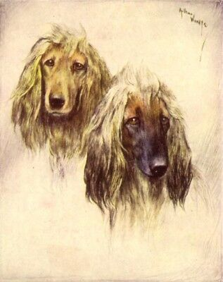 DOG Afghan Hound Pair, Pretty Trading Card, 1940