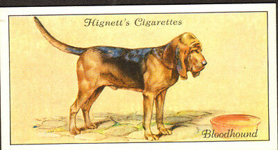 DOG Bloodhound Black and Tan, Small British Trading Card 1936