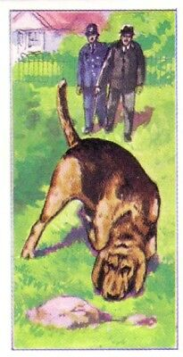 DOG Bloodhound Police Dog Tracking Criminal, 1970 Trading Card 40+ Years Old
