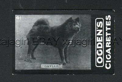 DOG Chow Chow (Named Kennel Club Champ) Photo Trading Card, 1902