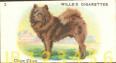 DOG Chow Chow (Named), Small British Trading Card Tobacco Card 1912