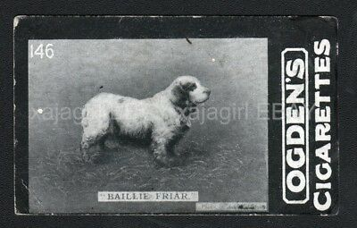 DOG Clumber Spaniel (Named Champion Kennel Club Show) Photo Trading Card, 1902