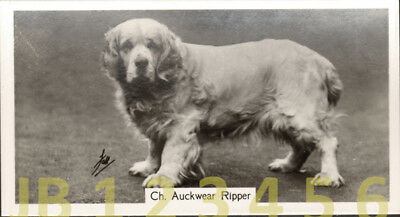 DOG Clumber Spaniel (Named Champion), Small Photo Trading Card 1938