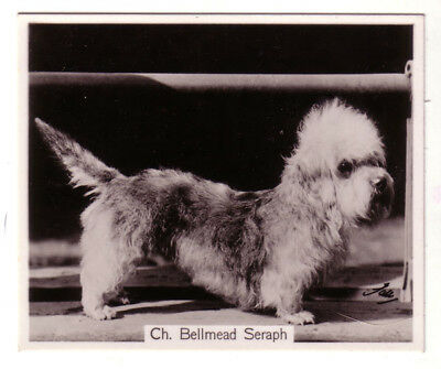 DOG Dandie Dinmont (Named), Photo Trading Card, 1938