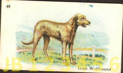 DOG Irish Wolfhound (Named), Small British Trading Card Tobacco Card 1912