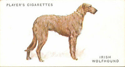 DOG Irish Wolfhound, Nice Breed Trading Card, 1931