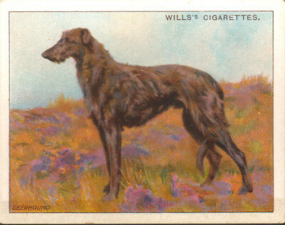DOG Scottish Deerhound, Antique 1914 Trading Card