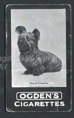 DOG Skye Terrier Champ (Named) Photo Trading Card, 1902