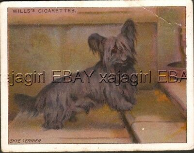 DOG Skye Terrier, Antique 1914 Trading Card