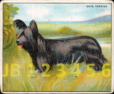 DOG Skye Terrier, Antique British 1924 Trading Card