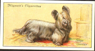 DOG Skye Terrier, Small British Trading Card 1936