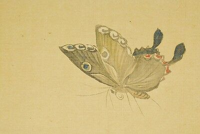 """Japanese Painting Scroll 41.5"""" Flower Art Butterfly Picture Japan Antique b705"""