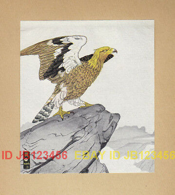 BIRD Eagle on Cliff's Edge, Beautiful 85-year-old Print
