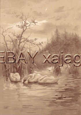 BIRD Swans at Evening, Antique Sepia Chromolith Print