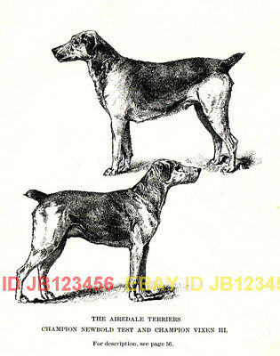 DOG Airedale Terrier Named, 1890s Rotogravure Print