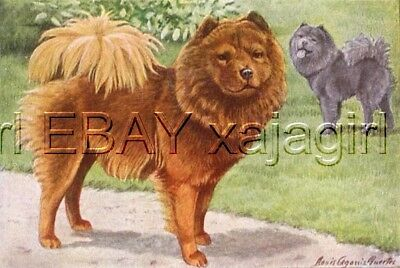 DOG Chow Chow, Gorgeous 85+ Year Old ANTIQUE Print