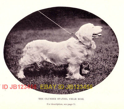 DOG Clumber Spaniel (Named), 1890s Antique Print