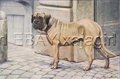 DOG Mastiff (huge), 85+ Year Old ANTIQUE Print