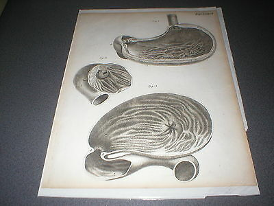 c 1800 3 Anatomical Engravings by Andrew Fyfe, Antique Medical Drawings