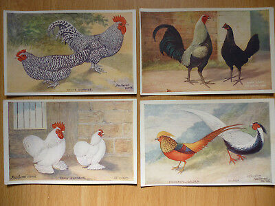 4x  THE FEATHERED WORLD VINTAGE  POSTCARDS POULTRY   (LOT 1)