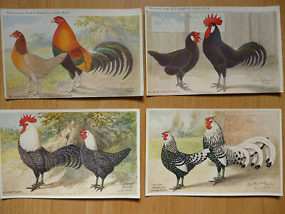4x  THE FEATHERED WORLD VINTAGE  POSTCARDS POULTRY   (LOT 4)