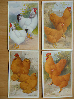 4x  THE FEATHERED WORLD VINTAGE  POSTCARDS POULTRY   (LOT 7)