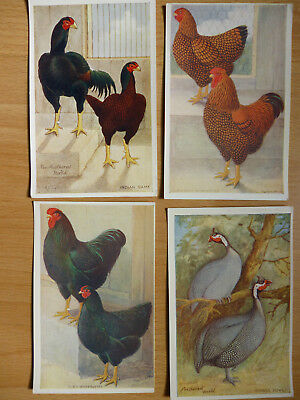 4x  THE FEATHERED WORLD VINTAGE  POSTCARDS POULTRY   (LOT 8)