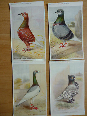 4x  THE FEATHERED WORLD VINTAGE  POSTCARDS PIGEONS   (LOT 10)