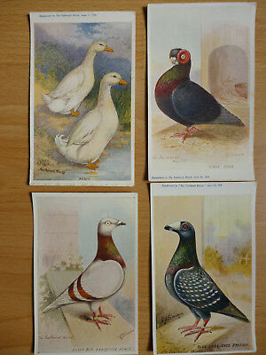 4x  THE FEATHERED WORLD VINTAGE  POSTCARDS PIGEONS & DUCKS  (LOT 12)
