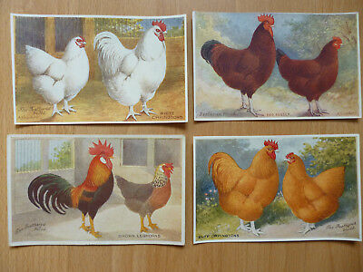 4x  THE FEATHERED WORLD VINTAGE  POSTCARDS POULTRY