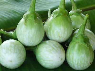 "Eggplant ""thai Round Green"" (30 Seeds)"